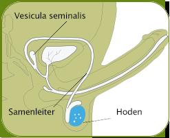 wie produzieren mehr sperma